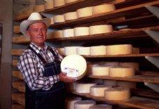 Mennonite Cheese