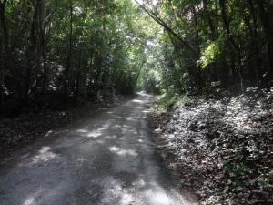 Access Road into Calakmul