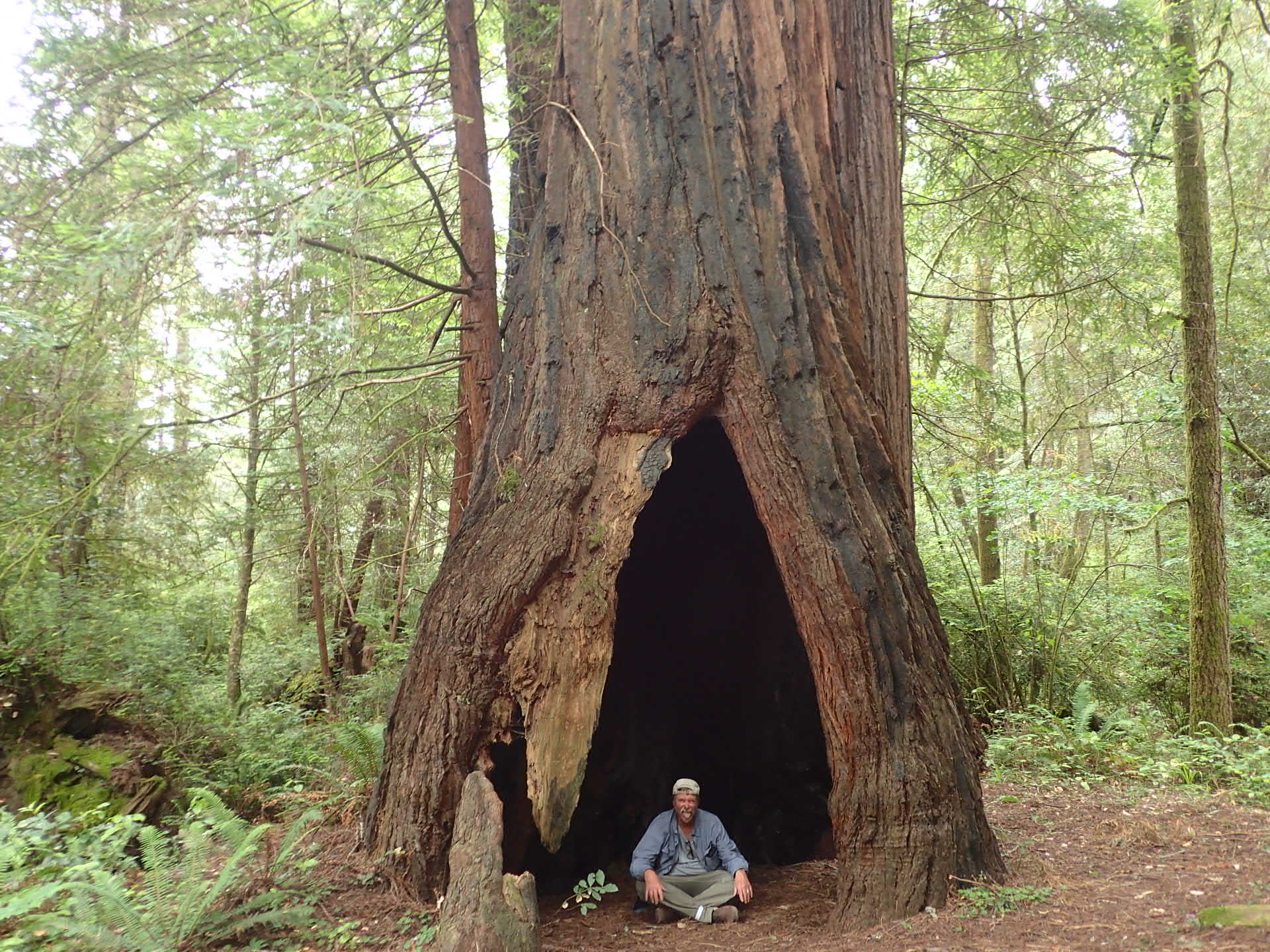 California S Redwood Country Imagine Travel Discover